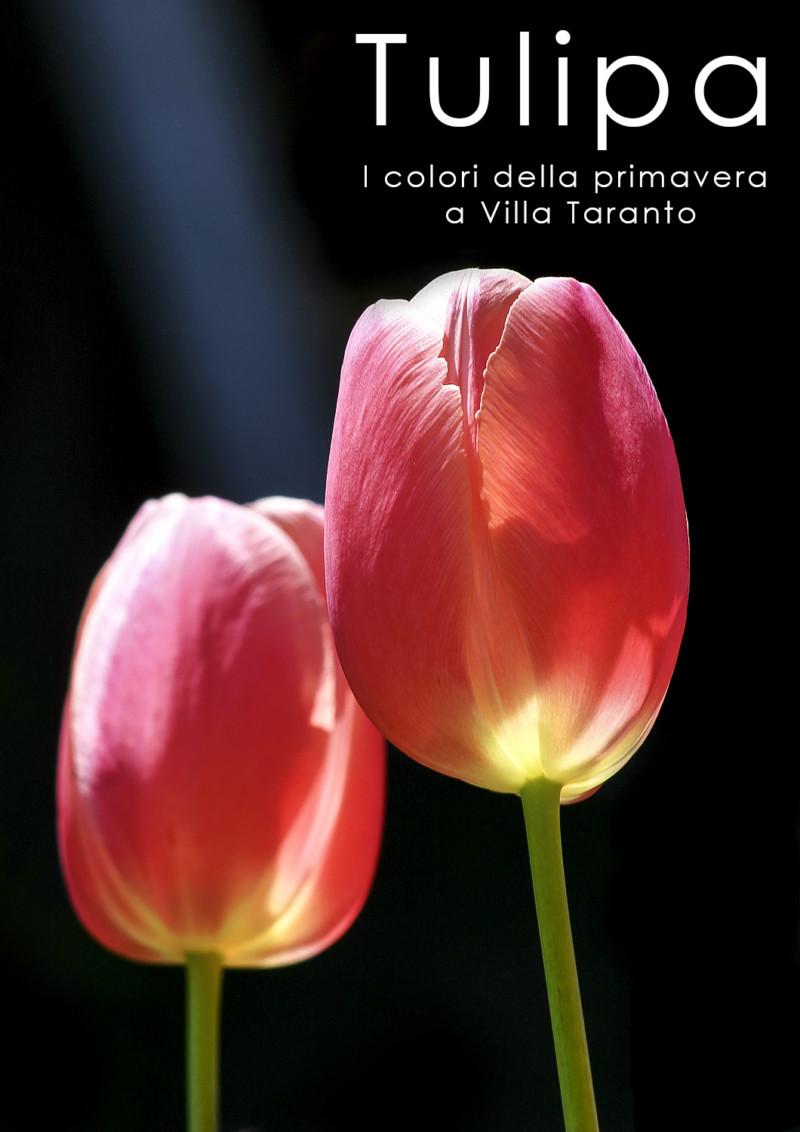 -fotoalbum-tulipani-Villa-Taranto